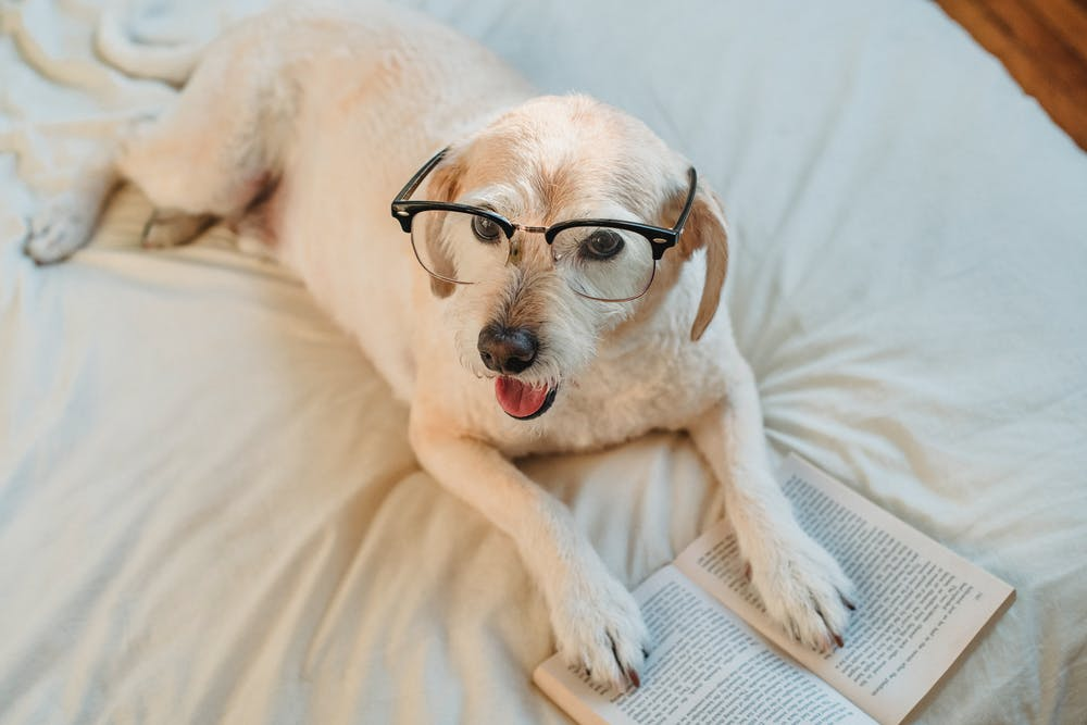 Cute photo of dog reading a story